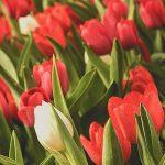 Fleur bulbeuse