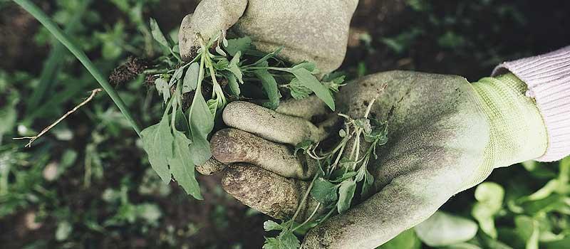 jardinage avec des gants