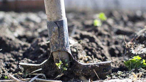 lexique jardinage