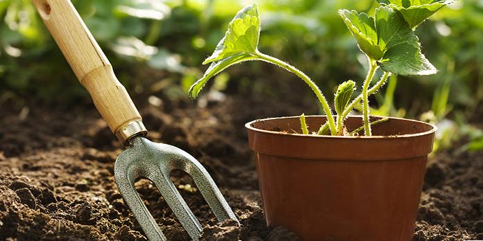Lexique jardinage : bien connaître les termes employés