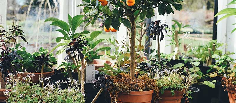 Culture de plantes d'interieur