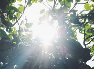 Éclairage pour les plantes : lumière du jour