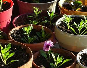 multiplier plante intérieur