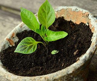 Terreau et compost pour plante d'intérieur