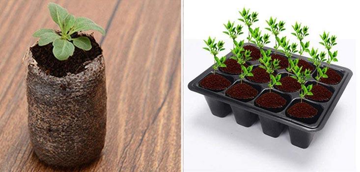 semi pour serre de jardin