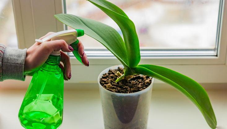 Pulvérisateur à gâchette pour plantes