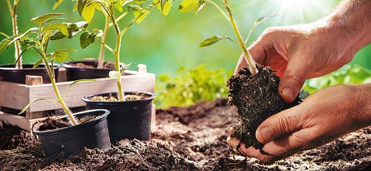 semi serre de jardin