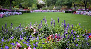 Fleurir et arborer son jardin