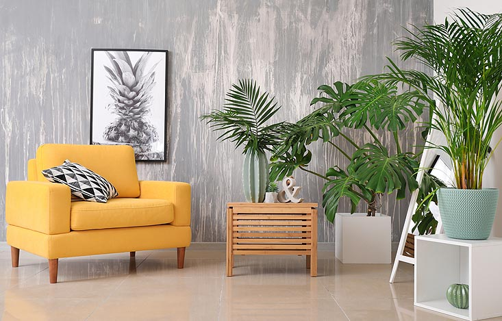 purifier l'air avec des plantes d'intérieur