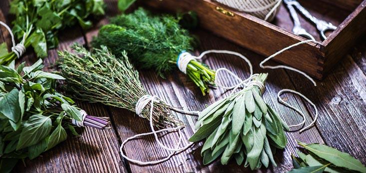 cultiver des aromates